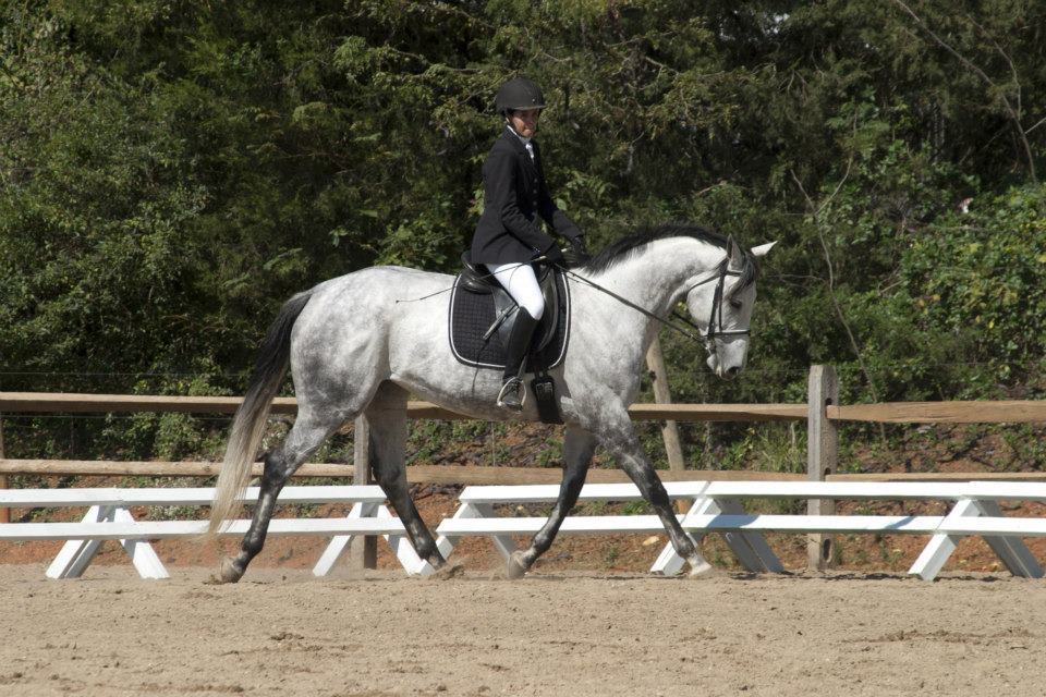 Danika - a Horse for Sale in Winston-Salem