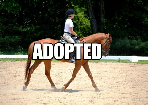 Even Show adopted