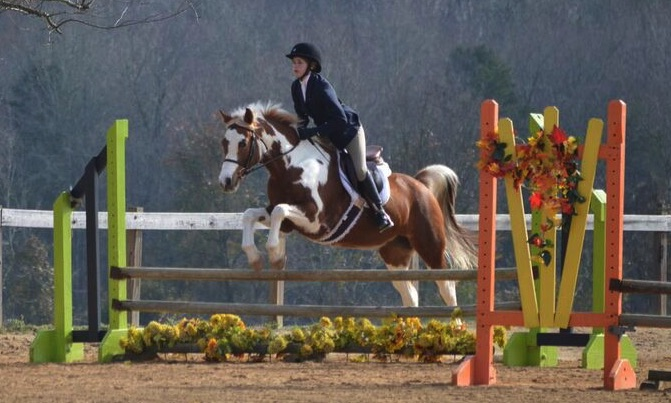 Challenger's Dress Rehearsal - a Horse for Sale in Winston-Salem