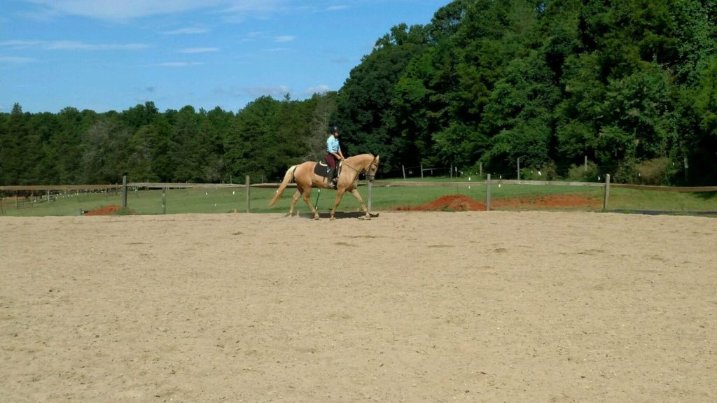Sunny - a Horse for Sale in Winston-Salem