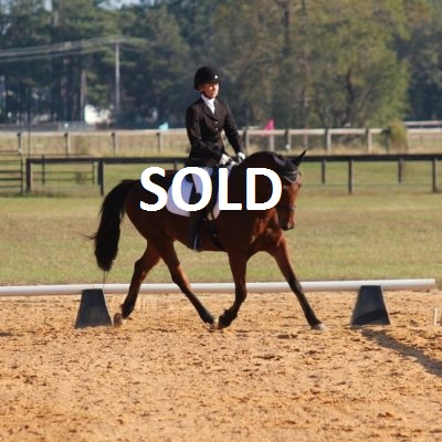 Tip Your Hat - a Horse for Sale in Winston-Salem