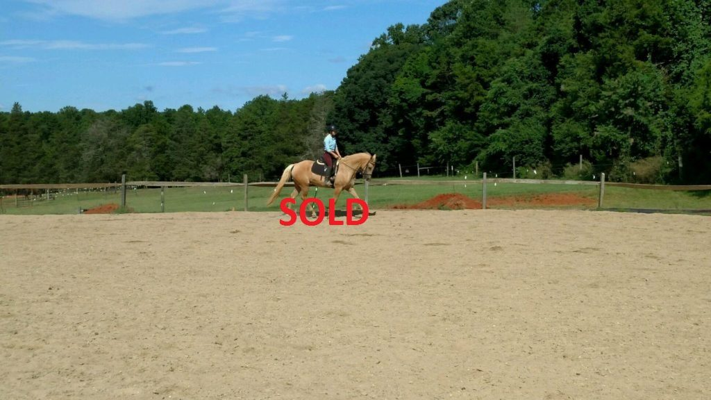 Sunny- SOLD - a Horse for Sale in Winston-Salem